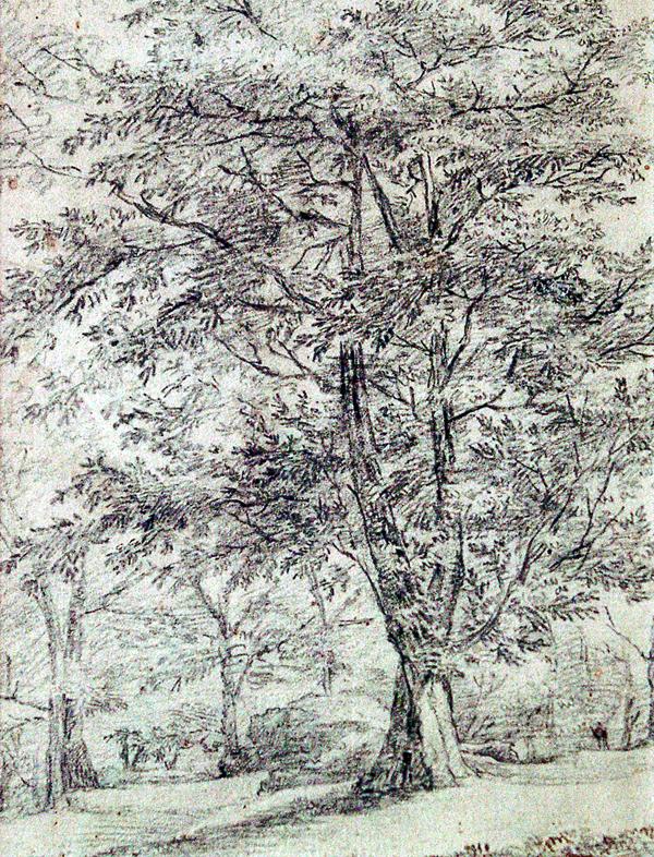 Van Diest, Jan Trees in Summer