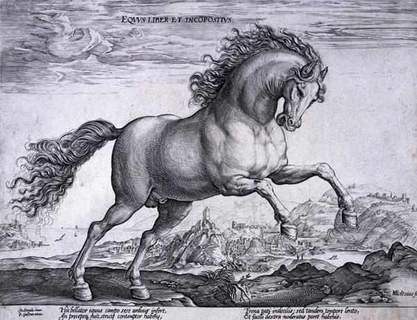 Goltzius, Hendrick Equus Liber et Incopositus