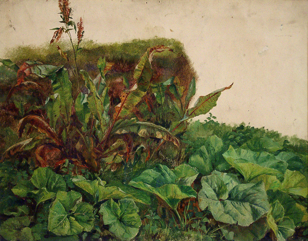 Landseer, Edwin (attributed to) Study of Wayside Plants