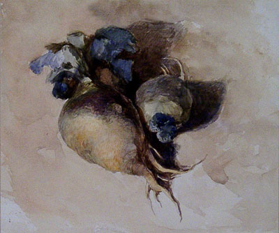 de Wint, Peter (attributed to) Turnips