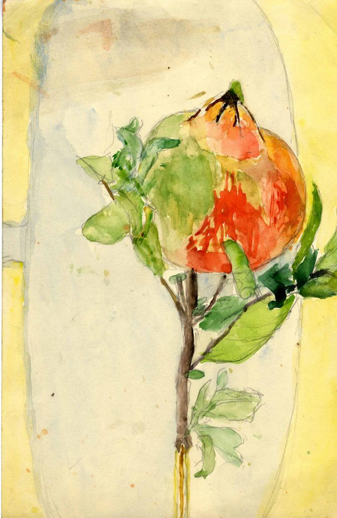 Freud, Annabel Rosehip or Pomegranate Fruit