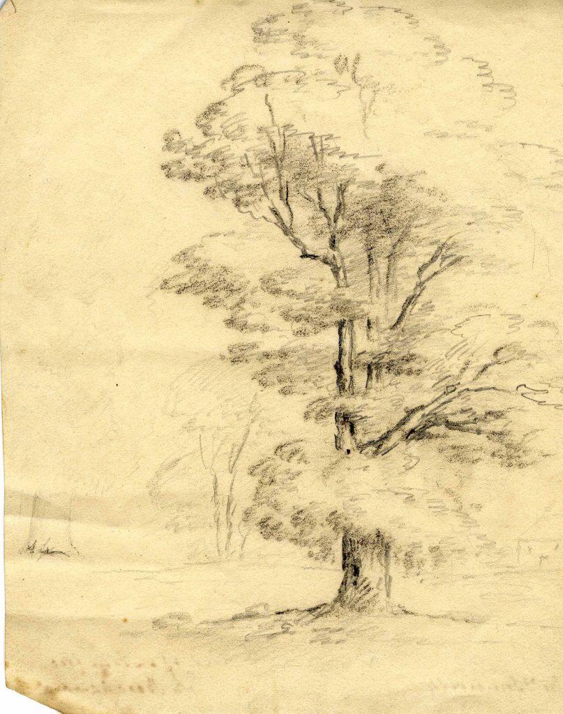 Somerville Study of an Elm Tree near Beechwood