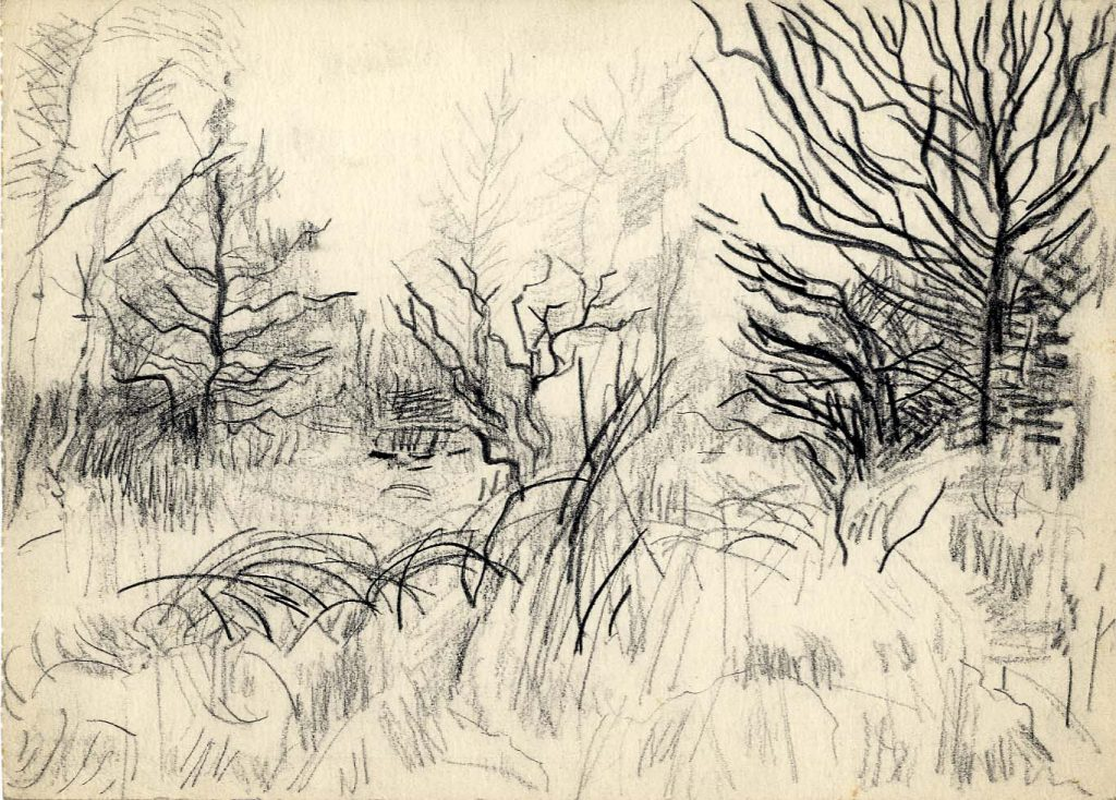 Unknown Woodland Sketch