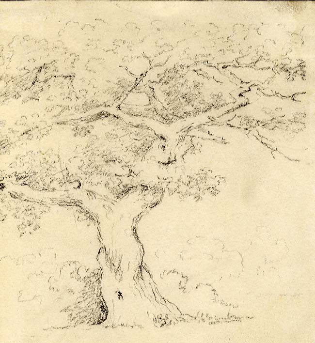 Unknown Tree Study
