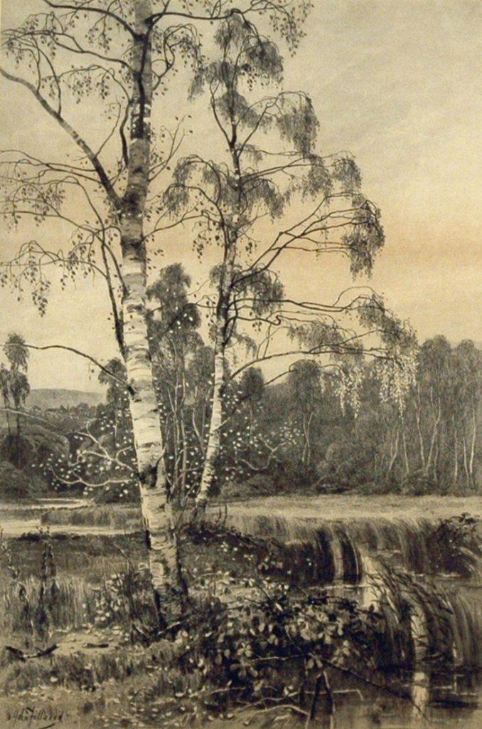 Fullwood, John Silver Birch Trees