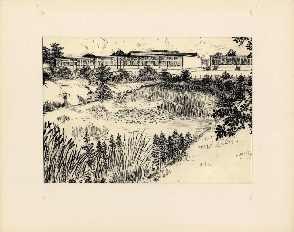 Arnold, Harry Reginald Leighswood Infant School – Wood and Pool – Aldridge