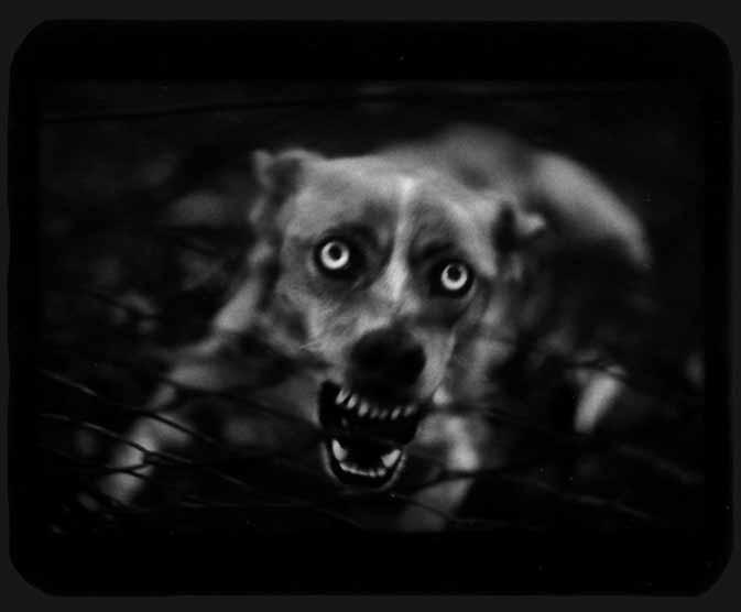 Brunelli, Giacomo Untitled (The Blind Dog)